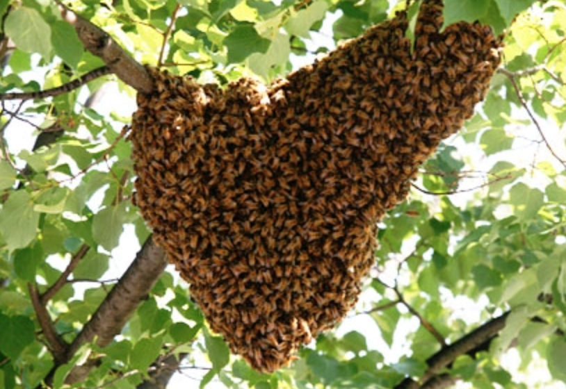 bee hive removals